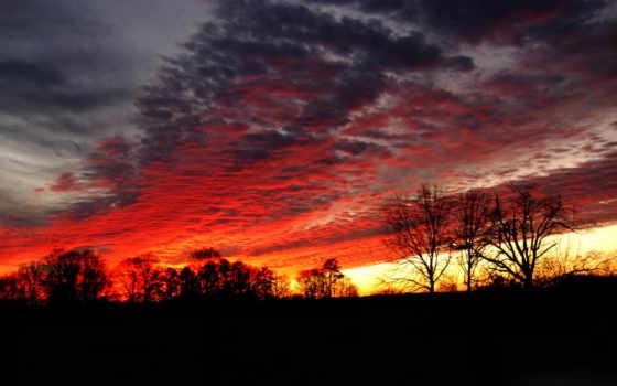 oblaka, закате, багровые, небо, bir, закат, силуэт, trees,