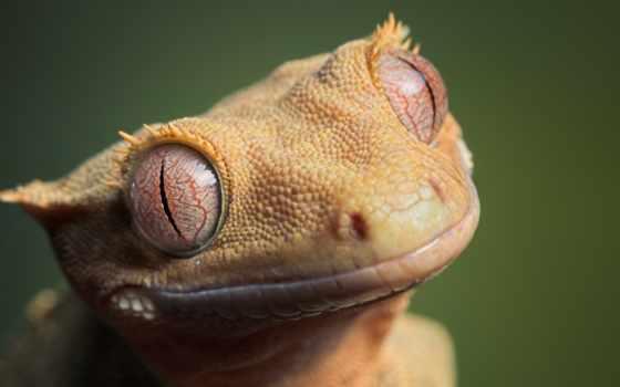 gecko, яndex, других, breathtaking, макромир, пришельцев, миров, коллекциях, card, гекконы,