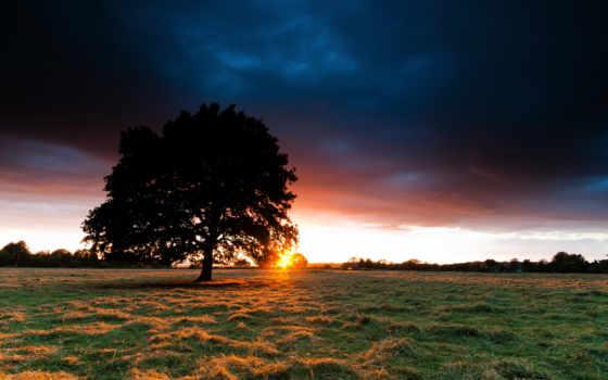 закат, дерево, небо, поле, трава, sun, сено, луг, landscape,
