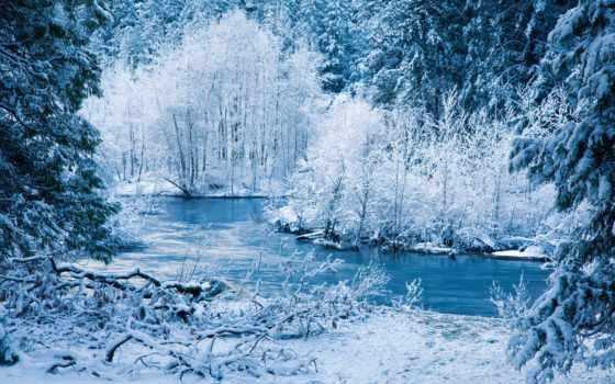 winter, снег, trees, rivers, природа, лес, landscape, кустики, ветви, ürek,