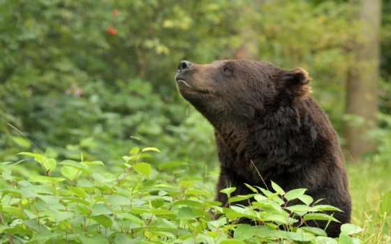 zhivotnye, медведь, orso, животныесобаки, большие, кошки, video, kкошки, kнасекомые, птицы, combine,