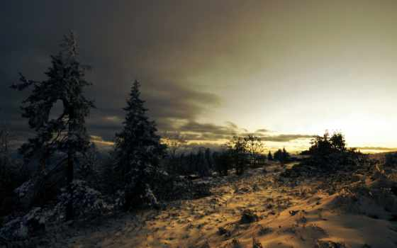 снег, хвойные, деревья, ёль, тучи, зима, закат, пейзаж,