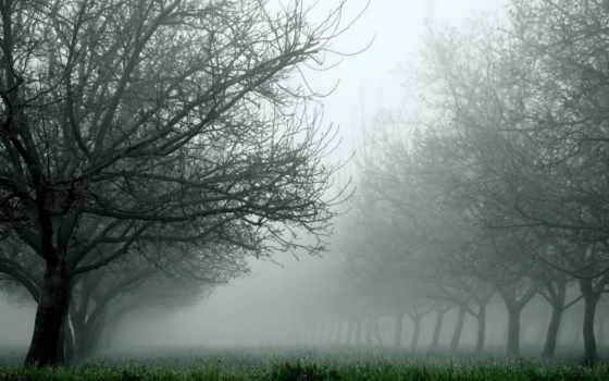 природа, деревья, трава