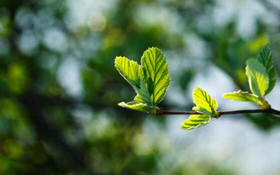 весна, макро, листва