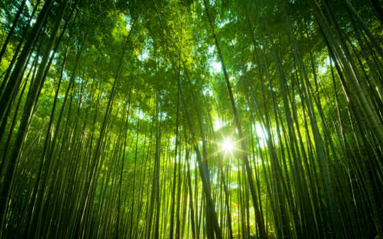 лес, high, free, аокигахара, качество,