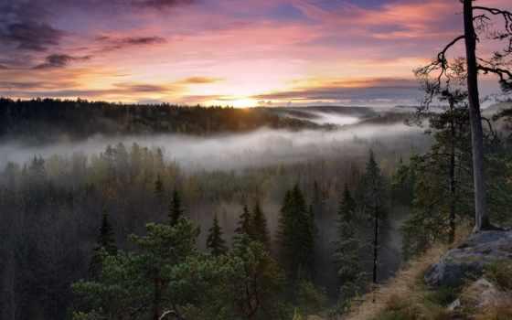 финляндия, national, park, утро, rising, туман, noux, лес, trees,