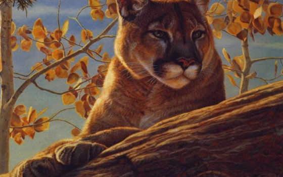 portrait, cougar, baughan, kalon, art, range, фронтовой, глаза, prints,