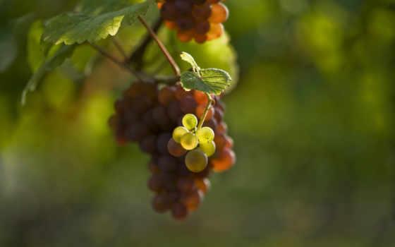 фото, eu, mim, скопление, виноградная, videira, vocês, рамос, sou,