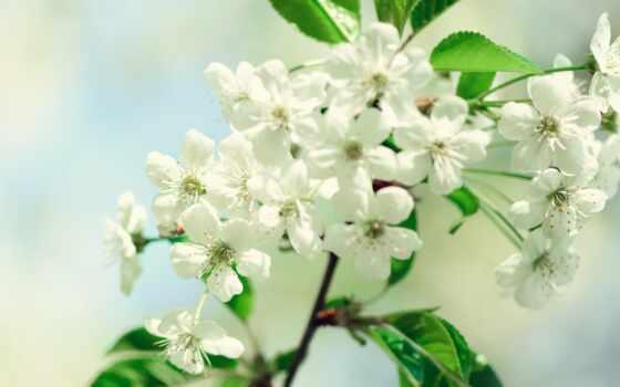 gullar, цветы, гуль, чая, labrador, tashkent, лола, wild, northern, marsh