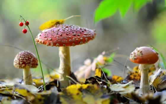 грибы, природа, лес,
