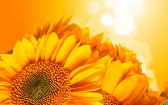 подсолнухи, sun, summer