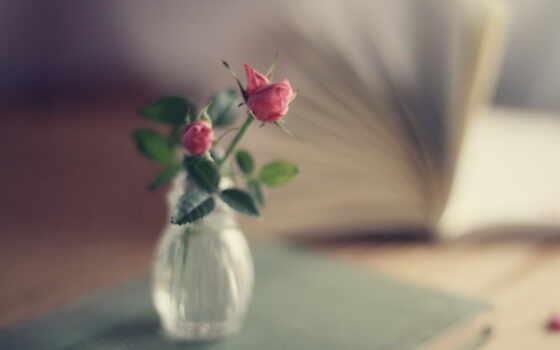 букет, розы, розовые