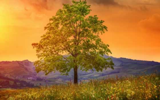 луг, дерево, landscape, холмы, поле, overlooking,