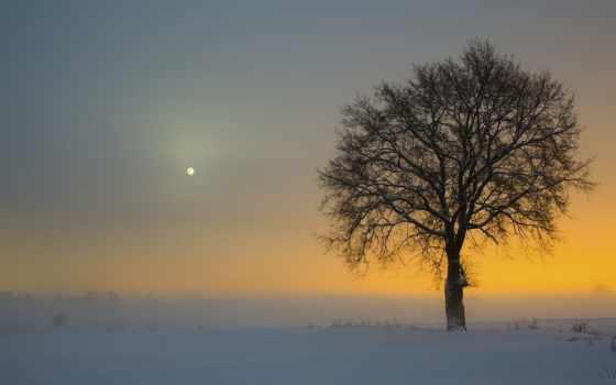 дерево, одинокое, поле, снег, winter, небе, заснеженном, trees, луна, видна, закате,