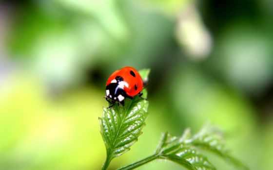 макро, божья, природа, природы, living, коровка, звуки, природе, зелёный, park,