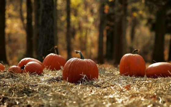 тыквы, halloween, stock, осень, images, fotosearch, красивые, урожай, лес, land,
