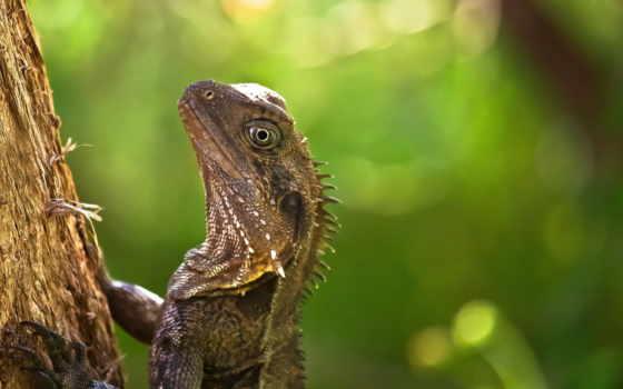 reptile, дикая, noviembre, природа, zhivotnye, ящерицы,