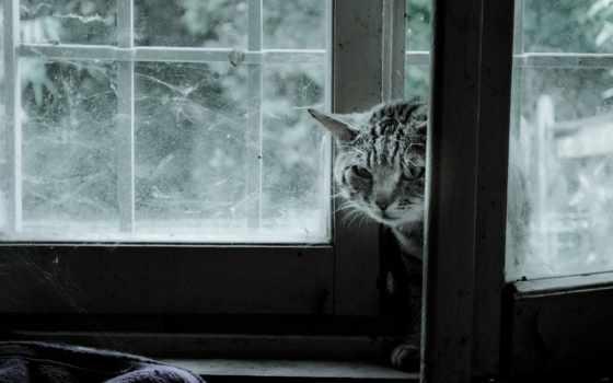 pulpit, окно, кошаки, cats, кошки, bengalski, kot, кот, tapety,