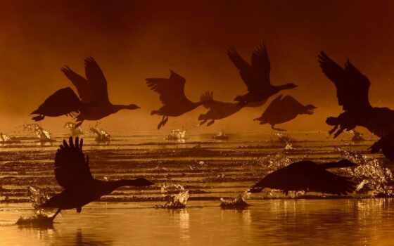 water, splash, птица, силуэт, takeoff, крыло, другие, полет