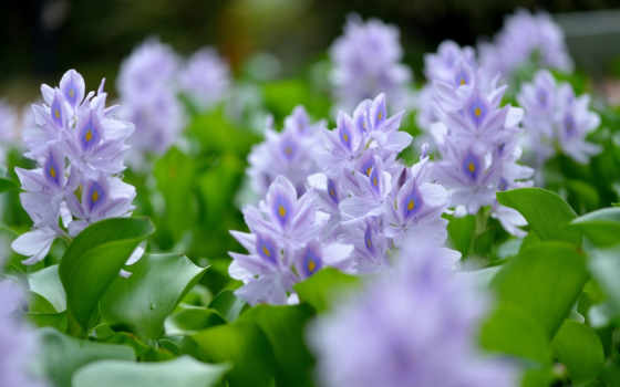 цветы, сборнике,