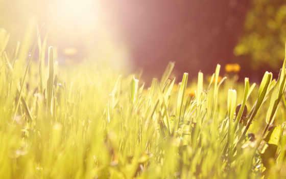 трава, свет, утро