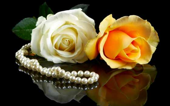 розы, цветы, white, pearl, пара, black, yellow, белые, красивые,