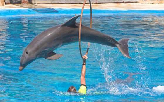 дельфин, bottlenose, дельфинов, красивые, большие, tursiops, дельфины, бесплатные,