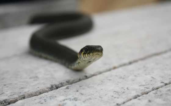 коллекция, страница, трава, змеи, листва, весна, snake, яд,