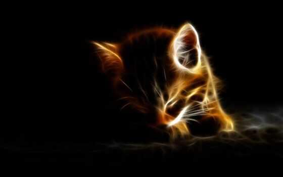 котенок, кот