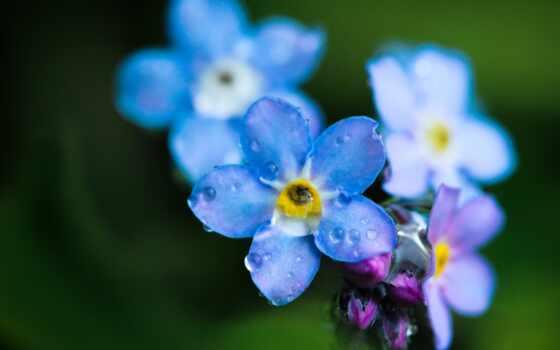 макро, цветок, капли