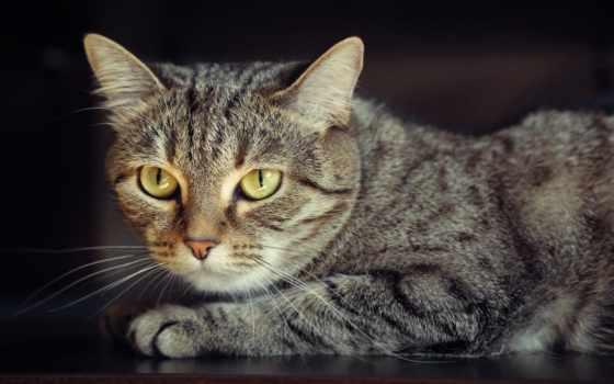 black, кот, взгляд
