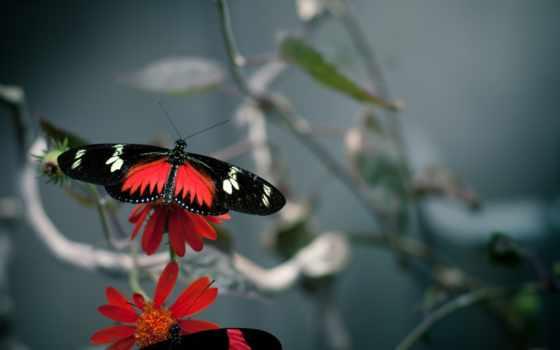 бабочки, цветы, качестве
