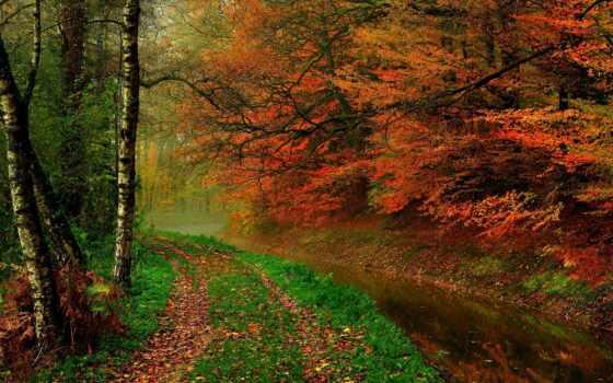 осень, trees, река