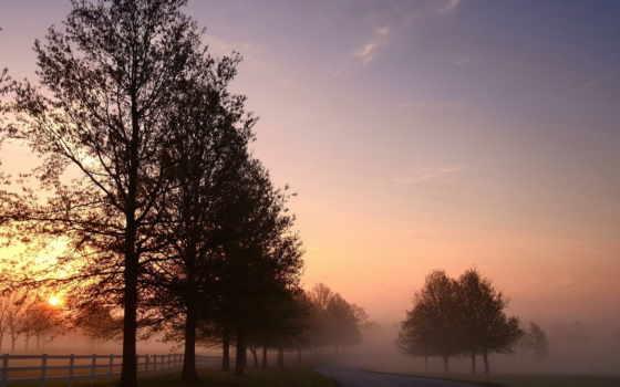 утро, дорога, туман
