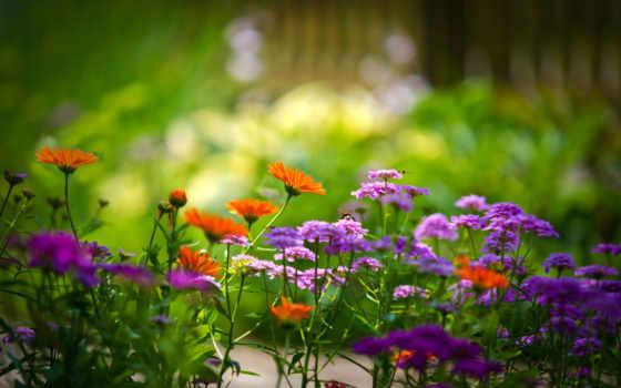 cvety, природа, summer, красивые, зелёный, экология,