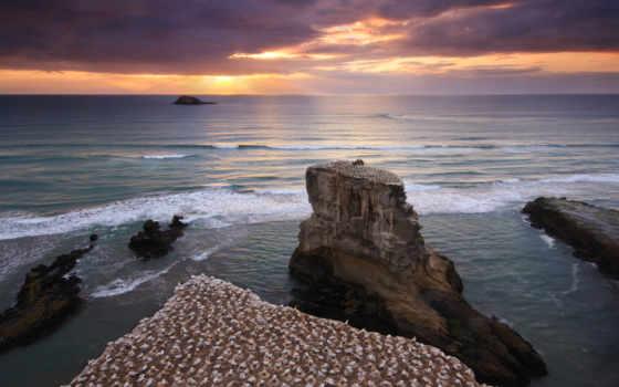muriwai, олушей, колония, пляже,