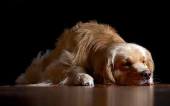 sleeping, собака, dogs, фон, desktop, кб, are,
