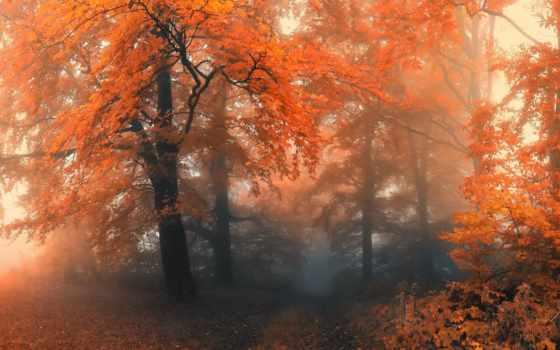 осень, лес, туманная, туманные, осенние, фотопейзажи, пришлю, коллекция,