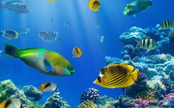 print, фотообои, море, купить, каталог, underwater, rub, цена, основе, флизелиновой, world,