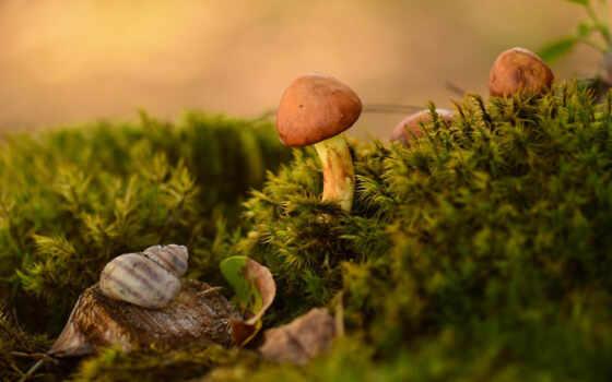 фотограф, among, зеленое, мох, mushroom, wild