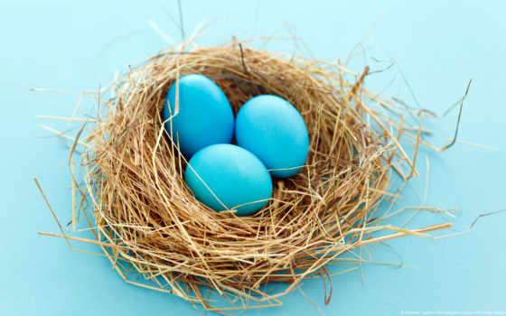 eggs, blue