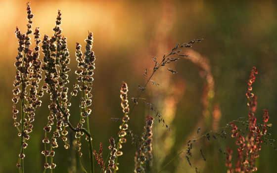 трава, луг, графика