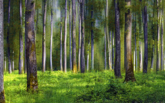 лес, desktop, scape, superb, фон,
