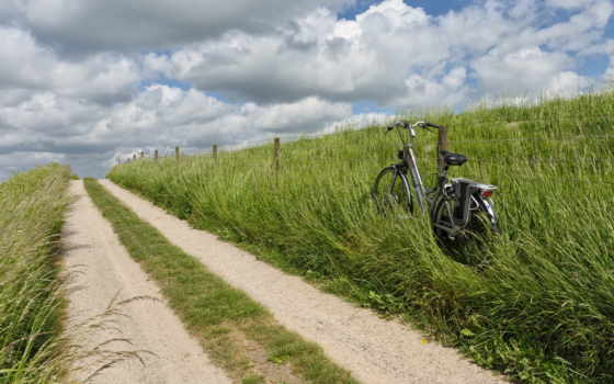 bike, драйв, will, долго, цветов, продолжительность, нарву, букет, подарю,