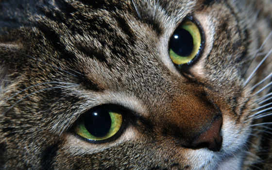 кот c зелёными глазами крупным планом
