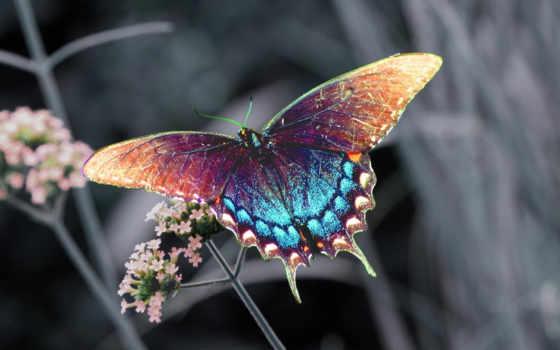 бабочки, самые, бабочка