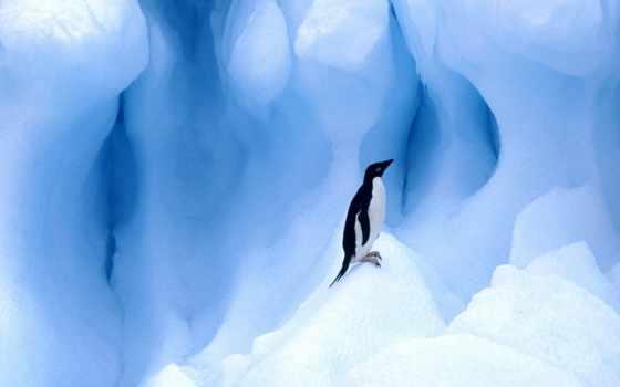 пингвин, лед, penguins