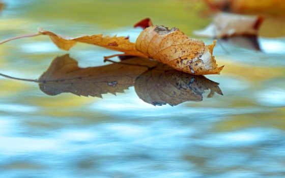 flickr, листва, talking