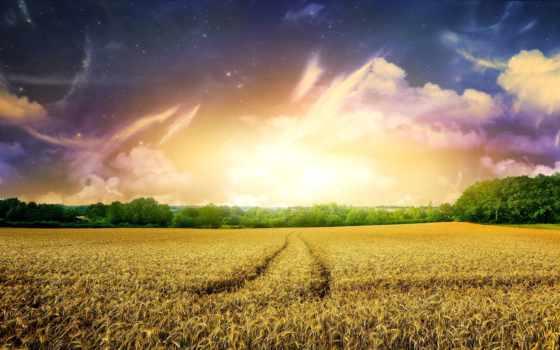 поле, rye, тегам, следующим, наши, быстро, possible, найти,