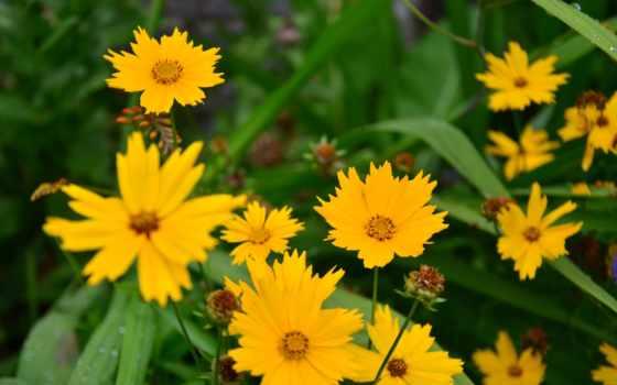 fh, jpeg, цветы,